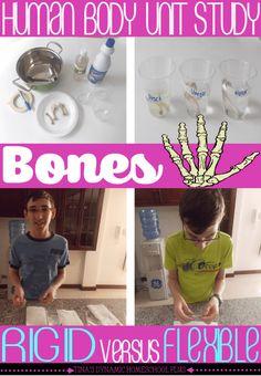Human Body Unit Study. Rigid versus Flexible Bones Hands-on Activity @ Tina's Dynamic Homeschool Plus