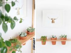 5 DIY muy originales para decorar la pared con plantas #DIY #plants #hagingplanter #wall #planter Diy Plants, Planter Pots, Gardens, Indoor Plants, Garden Decorations, The Originals, Plant Pots