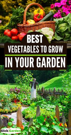 15 Veggies To Grow As A Beginner