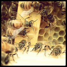Bees. Me and mom are going to be taking beekeeping classes soon and going to keep bees! Super excited!