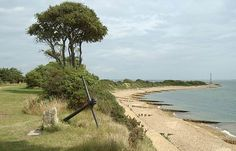 Lepe Beach - the conifers sent from USA's north-west coast ...