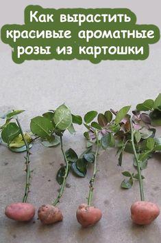 Garden Design, Home And Garden, Gardening, Fruit, Flowers, Plants, Vegetable Garden, Garden, Sodas