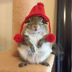 Jill The Squirrel: the holidays are a go! Animals And Pets, Baby Animals, Funny Animals, Cute Animals, Cute Creatures, Beautiful Creatures, Animals Beautiful, Cute Squirrel, Baby Squirrel