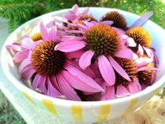Klíčení semínek a luštěnin (čočky, munga, adzuki a slunečnice) - Bylinkovo. Health Fitness, Plants, Plant, Fitness, Planets, Health And Fitness