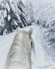 2017/02/03 Winter Horse Ride