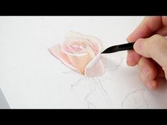 The Mind of Watercolor with Steve Mitchell - Lesson 3 - Botanical Rose Part 1 -
