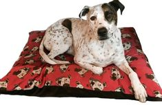 Arthur Crossbreed Rescue Mongrel Dog Bed Mongrel, Bold Fonts, Mixed Breed, Bed Covers, Dog Bed, Memory Foam, Your Pet, Cushions, Pets