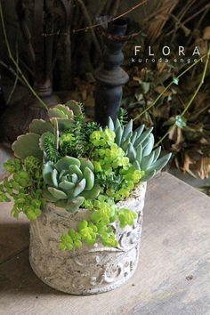 #Succulent #Pot
