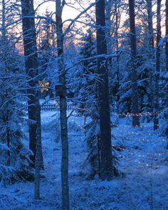 Cozy winter morning and blue moment, my Finnish window view in December.