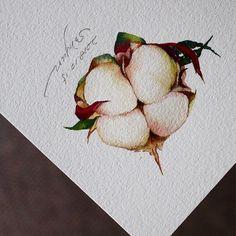 Watercolor Drawing, Watercolor Flowers, Watercolor Paintings, Watercolour Tutorials, Acrylic Art, Botanical Art, Colored Pencils, Flower Art, Still Life