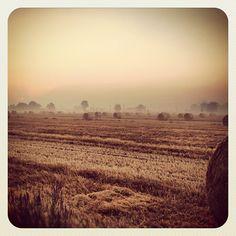 Balle di fieno di prima mattina #soliera #grano #