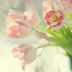 Pink Tulips Photograph, Color Still Life, Floral Art Print, Shabby Chic Home, Soft Focus. $25.00, via Etsy.