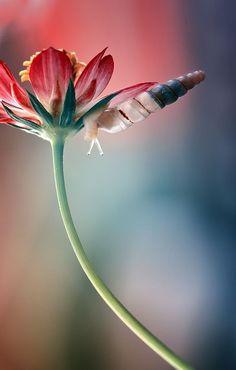 Flower hosting a snail