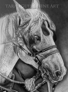 Horse Pencil Drawing Print Graphite Pencil by TaraAguilarFineArt