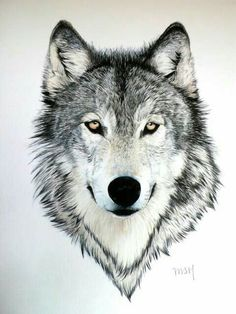 wolf with bright yellow eyes. - Gray wolf with bright yellow eyes. -Gray wolf with bright yellow eyes. - Gray wolf with bright yellow eyes. Wolf Tattoos, Animal Tattoos, Wolf Tattoo Design, Tattoo Designs, Tattoo Ideas, Wolf Design, Tattoo Artists Near Me, Remembrance Tattoos, Wolf Sketch