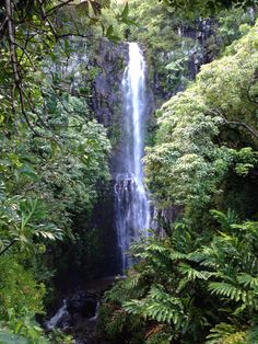 Maui, Hawaii. Road to Hana