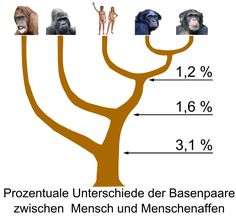 #Difference in #DNA base pairs between #HomoSapiens and other #Hominidea. #Religion #Science #Evolution #Animals #Humans [Hominidae_tree_01.png (2048×1876)]