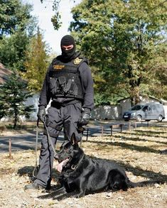 Housetraining Your Dog Military Working Dogs, Military Dogs, Police Dogs, Military Personnel, Military Service, German Shepherd Puppies, German Shepherds, Brave Animals, K9 Officer