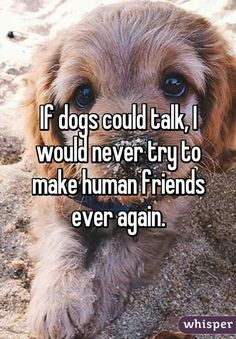 If dogs could talk..