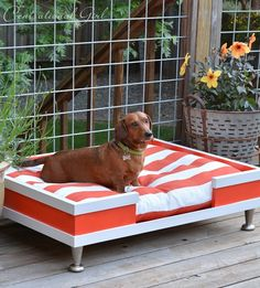 This is perfect for indoor and outdoors. Dachshund are very heavy so it is hard for them to sit on hard surfaces for a long time. & if you're out in the backyard bbqing or whatever this is perfect for the little guy or girl!