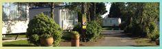 Caravan Park Cornwall St Ives, Campsite, Cornwall, Caravan, Park, Holiday, Plants, Camping, Vacations