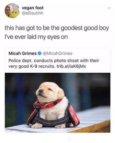 """This has got to be the goodest good boy I've ever laid my eyes on."" HOLY FRIGGIN CUTE EXPLOSION"