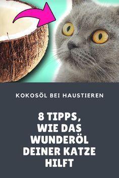 Kann Kokosöl bei Katzen angewendet werden? Auf jeden Fall! Wichtig ist, natives und hochwertiges Öl zu verwenden.8 Anlässe, zu denen man Katzen mit Kokosöl helfen kann.