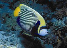 Study finds aquarium tropical fish imports to the U.S. often ...