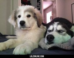 He loves his new sister #lol #haha #funny