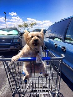 Now's this b cool's lukin! I goe's wiff's Mom shoppin but's I never's get's tu ride's in a cart likes this guy did's! Frisbee Bradley 19.) Dogs love to go shopping!
