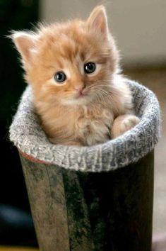 CUTE! #cats