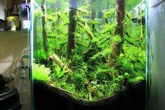 lesny biotop v akvariu 8 - My site Home Aquarium, Aquarium Design, Nature, Life, Ideas, Naturaleza, Thoughts, Natural, Scenery