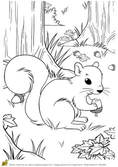 Coloriage petit ecureuil qui grignote