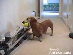 Jerry The Dachsund And His Fetch Machine