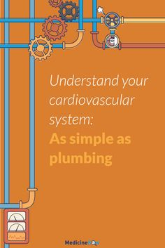 Understand Your Cardiovascular System: As Simple as Plumbing