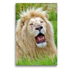 Lion, Portraits, Wall Art, Artworks, Animals, Color, Africa, Canvas, Cats