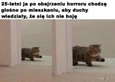Don't watch scary movies alone. Scary Movies, Horror Movies, Wtf Funny, Funny Cats, 25 Years Old, Cat Life, Cats Of Instagram, Cat Lovers, Haha