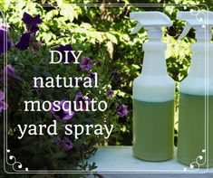 Organic Gardening Ideas How to Make Homemade Organic Mosquito Yard Spray - When you are out in the yard and you don't want to get bit by mosquitoes, this organic yard spray (which is safe for humans and plants) may be the solution for you. Mosquito Yard Spray, Diy Mosquito Repellent, Natural Mosquito Repellant, Mosquito Repelling Plants, Insect Repellent, Moskito Repellant, Natural Mosquito Spray, Organic Gardening Tips, Organic Farming