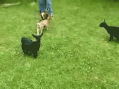 Two words: Goat. Ninja. | 23 Animal GIFs That Should Be World Famous
