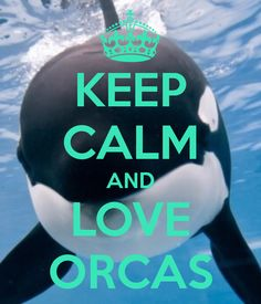 Keep Calm & Love Orcas