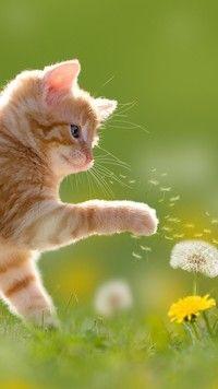 Kotek bawiący się dmuchawcem