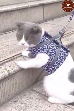 Cat Leash, Cat Harness, Animals And Pets, Cute Animals, Neon Cat, Mr Cat, Cat Vector, Maine Coon Cats, Pet Clothes