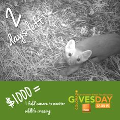 Countdown: 2 more days until #ColoradoGive Day! Learn more, donate, or pledge: http://rockymountainwild.org/donate/giving