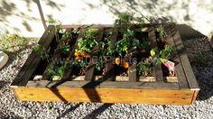 Pallet planter | 1001 Pallets