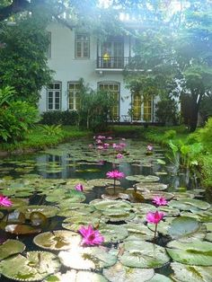Water lily pond - Old Harbor Hotel -Kerala, India/waking up here. . .looking out the window. . .like sleepwalking beauty. . .