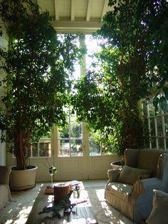 Interior Design - Inside outside garden