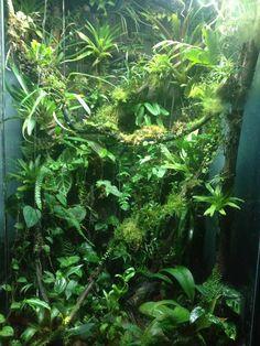 andersonii85's terrarium build
