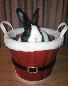 Bunny Says This Basket Is Perfect for Holiday Treats - Fill It Up!  bunny Jack!