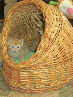 Vintage Kitty Wicker Weaved Kitty Cave by rosaelianevarez on Etsy, $48.00