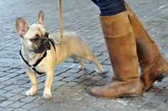 Really want this dog, and while we're at it I would take those boots too.